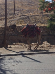 Token camel shot